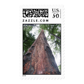 Coastal Redwood - Big Sur, California stamp