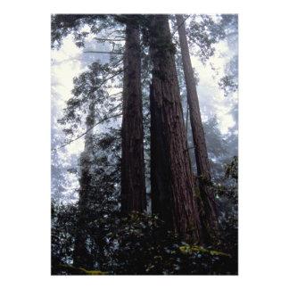 Coastal Redwoods Lady Bird Johnson Grove Califor Custom Invites