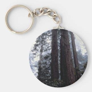 Coastal Redwoods, Lady Bird Johnson Grove, Califor Keychain