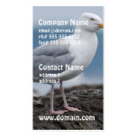 Coastal Seagull Double-Sided Standard Business Cards (Pack Of 100)