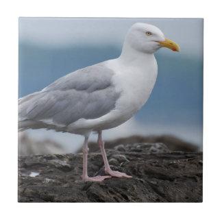 Coastal Seagull Ceramic Tile