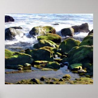 Coastal Tidepools Poster