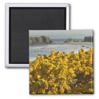 Coastal views, Bandon, Oregon 2 2 Inch Square Magnet