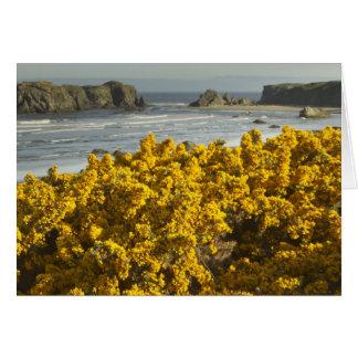 Coastal views, Bandon, Oregon 2 Card