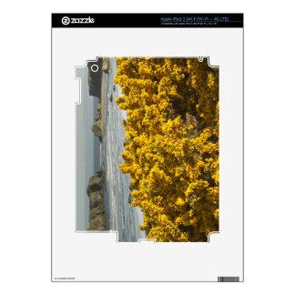 Coastal views, Bandon, Oregon 2 iPad 3 Decal