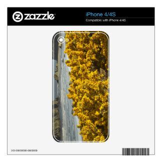Coastal views, Bandon, Oregon 2 iPhone 4S Decal