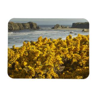Coastal views, Bandon, Oregon 2 Rectangular Photo Magnet