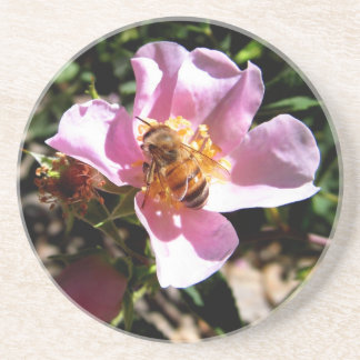Coaster - Bee on a wild rose