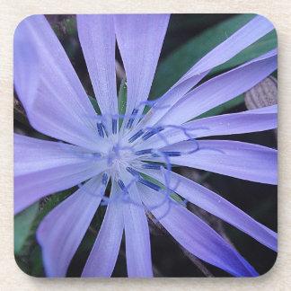 Coaster blue wildflower