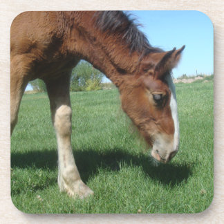 Coaster - Clydesdale Foal