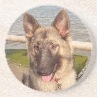 Coaster German Shepherd