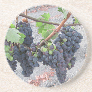 Coaster: Grapes on the Vine