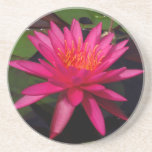 Coaster - pink water lily