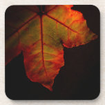 coaster set colorful autumn leaf