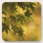 coaster set green maple leaves