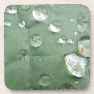 Coaster waterdrops on a green leaf