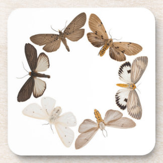 Coaster with butterfly ring