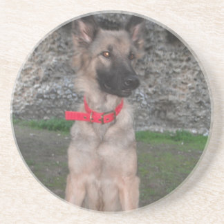 Coaster With German Shepherd