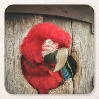 Coaster with green wing macaw parrot in barrel