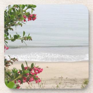 Coasters-Pacific Ocean Beach Coaster