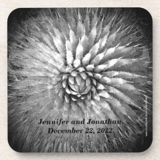 Coasters Set of 6 Agave Spikes Black and White B&W