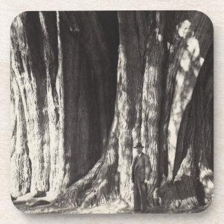 Coasters Tree Cypress Arbor del Tule Oax. Mexico