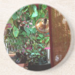 Coasters with Indoor Nature Photo