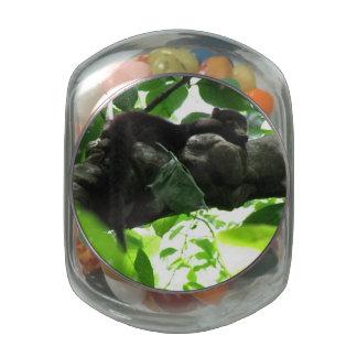 Coati Glass Candy Jars
