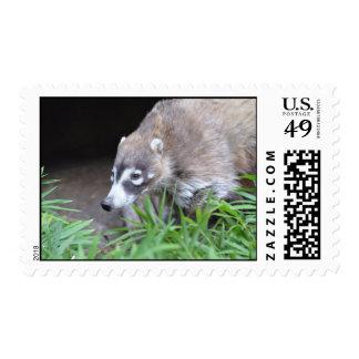 Coati de vagabundeo sello postal