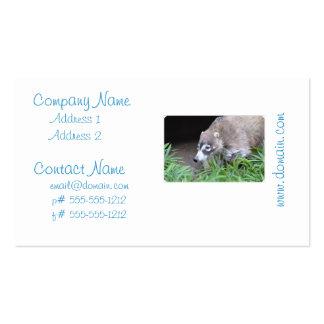 Coati de vagabundeo tarjetas de visita