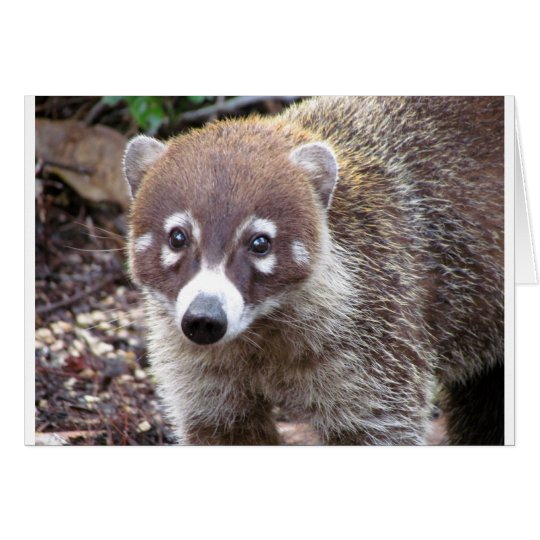 Coati Greeting Card
