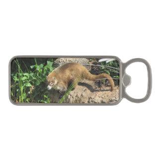 Coati Magnetic Bottle Opener