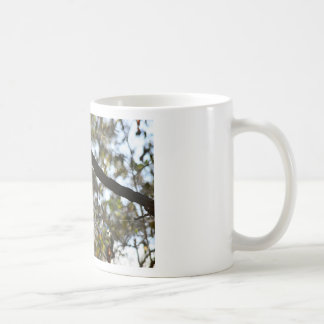 COB WEB RURAL QUEENSLAND AUSTRALIA COFFEE MUG