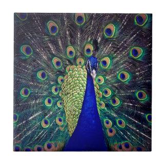 Cobalt Blue Peacock Ceramic Tile