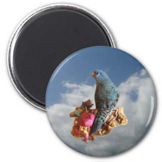 Cobalt linnie magnet