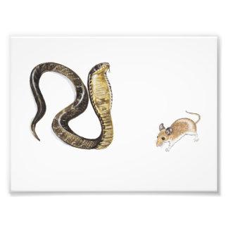Cobra contra rata impresion fotografica