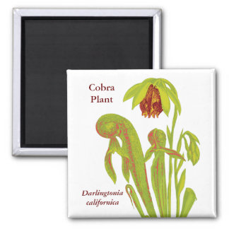 Cobra Plant Floral Art 2 Inch Square Magnet
