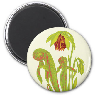 Cobra Plant Floral Art 2 Inch Round Magnet