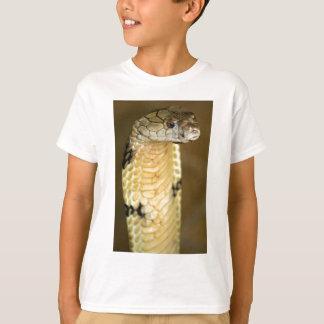 cobra real camisas