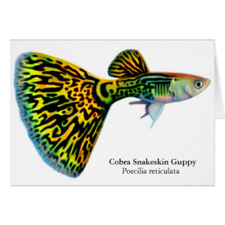Cobra Snakeskin Guppy Card