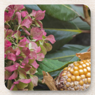 cobs and dried  hydrangea beverage coasters