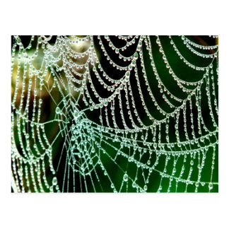 cobweb and  dewdrop peace and calm postcard