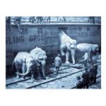 Coche de ferrocarril de Ringling de los elefantes Postal