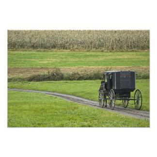 Cochecillo de Amish en el carril de la granja, Ohi Cojinete