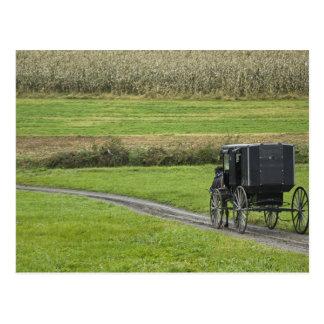 Cochecillo de Amish en el carril de la granja, Postal