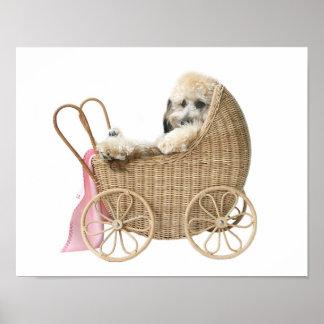 Cochecillo de bebé del caniche póster