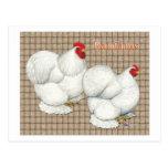 Cochin:  Gallos blancos Postales