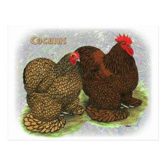 Cochin:  Golden-laced2 Postcard