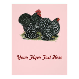 Cochin Mottled Chicken Pair Flyer