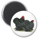 Cochin Mottled Chicken Pair Magnet